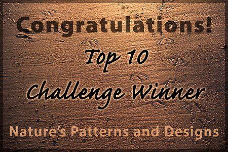 NPAD top 10 banner by Celeste Mookherjee