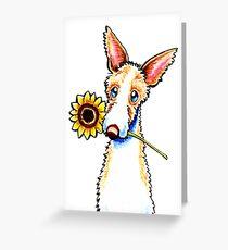Sunny Ibizan Hound Greeting Card