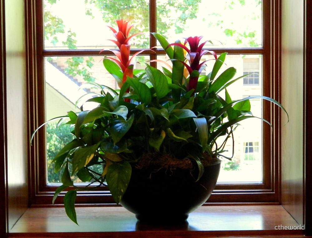 Windowsill Bouquet     ^ by ctheworld