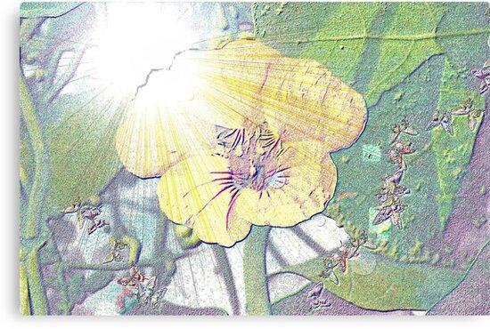 Nasturtium in sunlight by ♥⊱ B. Randi Bailey