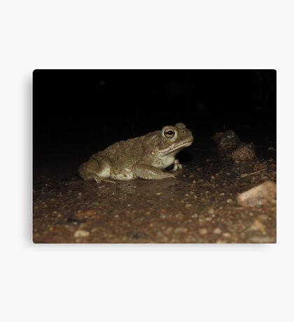 Sonoran Desert Toad (Colorado River Toad) Canvas Print
