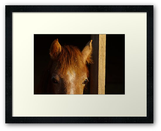 Peeking over the Barn Door by Clare Colins