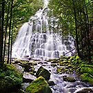 Nelson Falls Tasmanian by Robert-Todd