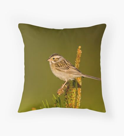 Clay Coloured Sparrow Throw Pillow