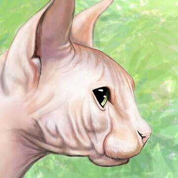 Sphynx Cat by SessaV