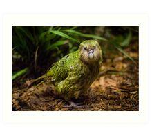 Sirocco the Kakapo Art Print