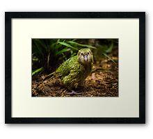 Sirocco the Kakapo Framed Print