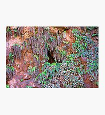 Havasupai Falls Fern Grotto  Photographic Print
