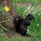 Shading Squirrel and Dandelion by AnnDixon