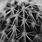 spiky protection by Ursa Vogel