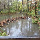 Beaver dam by nealbarnett