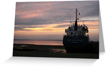 The Sea Kestrel by Touchstone21