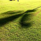 Tree Shadows by John Dalkin