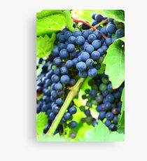 Winery Vineyard Canvas Print