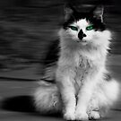 cat by clayton  jordan