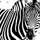 The Zebra by FelipeLodi