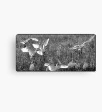 Egrets  7 Canvas Print