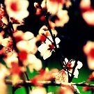 peach tree in bloom by lilli robertson