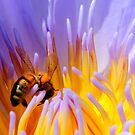 nectar by Trish Threlfall