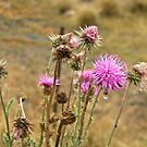 A weed is but an unloved flower by Chris Brunton
