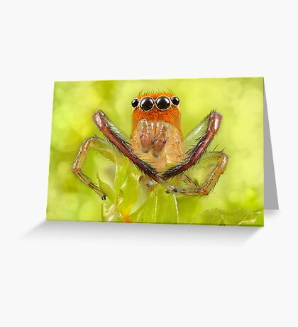 'Orange-faced Jumping Spider (Prostheclina pallida Keyserling)' Greeting Card