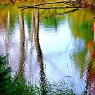 Early Fall Reflections ! by Elfriede Fulda