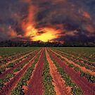 Winchfield Crops by martin bullimore