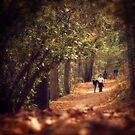 Linville Woodland by RayDevlin