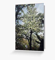 Springtime Saddness Greeting Card