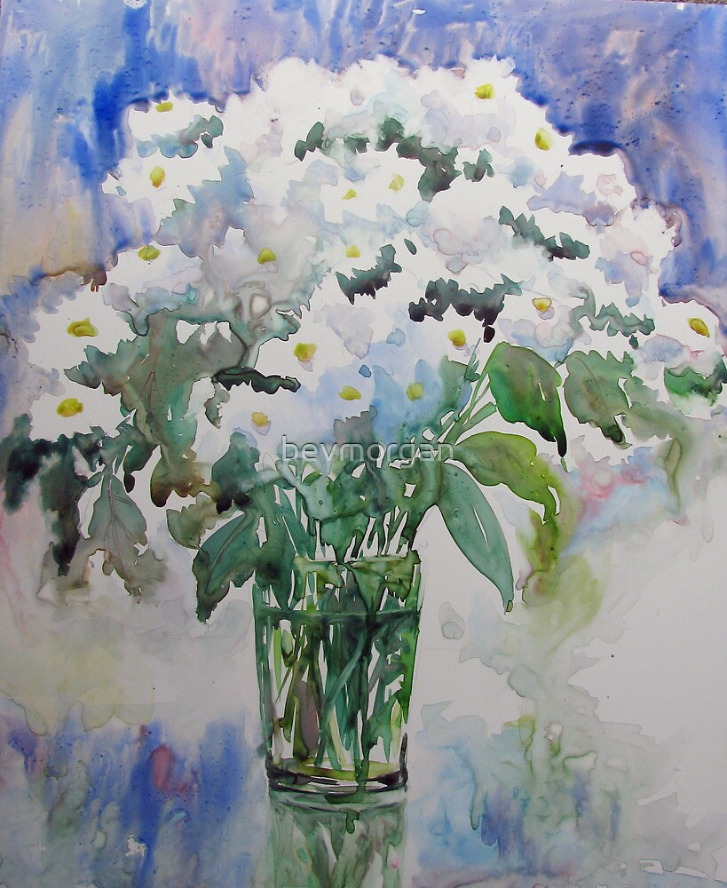 White Mums by bevmorgan