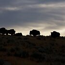 Buffalo Silhouette by pmreed
