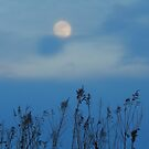Moon Stalked by WildThingPhotos