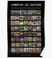 """American Salticids"" Jumping Spider Poster Poster"