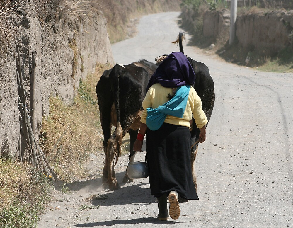 Herding Cows Down a Road in Cotacachi by rhamm