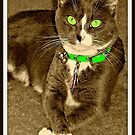 Miss Sassy Thank You Very Much by Vince Scaglione