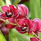 A couple of Orchids by mooksool