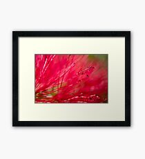 Bottle Brush Abstract Framed Print