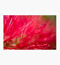 Bottle Brush Abstract Photographic Print