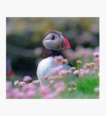 Puffin with flowers  Photographic Print