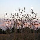 Autumn grass by KatDoodling