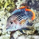 Fish - Rainbowfish by Susan Savad