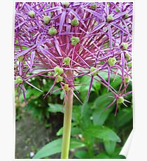 Spikey Lilac and Green Poster