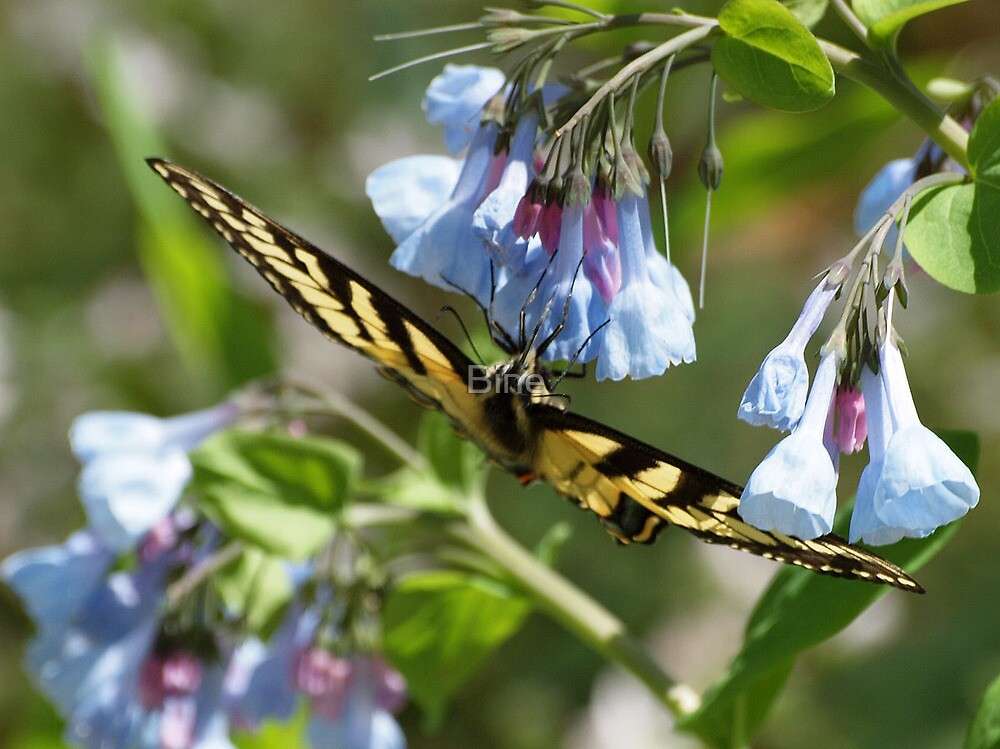 Hanging on for sweet nectar by Bine