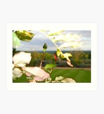 Buds of Spring Art Print