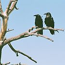 Crows at Grand Canyon by Liane6161