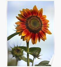 Myra's Sunflower Poster
