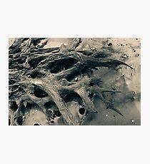 Driftwood Beach at Jekyll Island Photographic Print