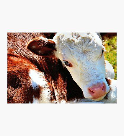 Close-up Calf Photographic Print