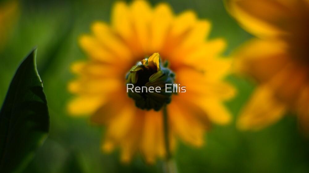 Awakening by Renee Ellis