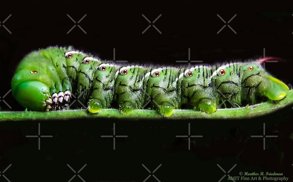 Katy Katerpillar Ate All The Leaves! by Heather Friedman